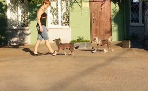 Лечение собаки в Харькове. До и после операции.