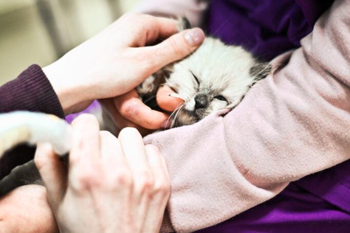 Профилактический осмотр кошек в Харькове