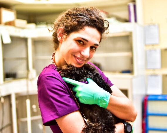 Анестезия собак в Харькове