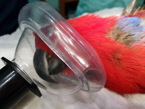 jendoskopija-ptic-1
