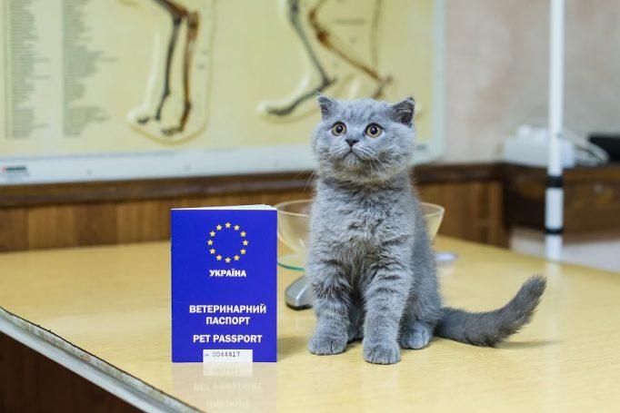 oformlenie-veterinarnogo-mezhdunarodnogo-pasporta-dlja-koshki