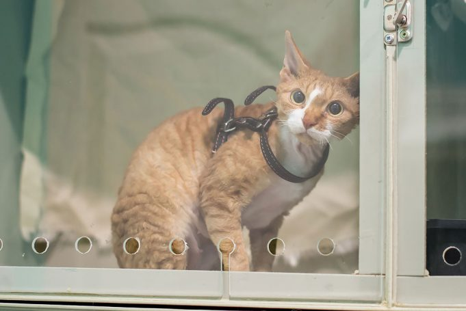 Стационар для кошек